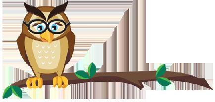 edgewise-owl